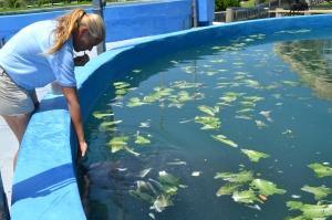 Jodi Tuzinski é especialista em cuidados com os animais aquáticos.