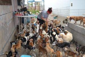 Voluntária alimentando os animais, que educadamente esperam sua vez